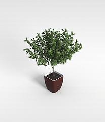 松树盆栽模型3d模型