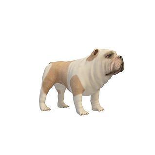 英国斗牛犬3d模型