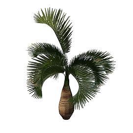 棕榈树3d模型