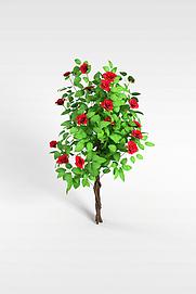 3d玫瑰花模型