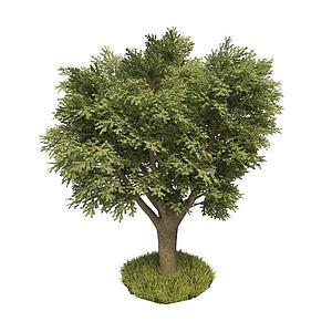 榆木模型3d模型