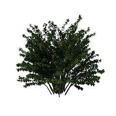 公园绿化树3D模型3d模型