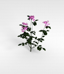 仿真植物盆栽模型3d模型