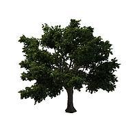茂密大树香樟树3D模型3d模型