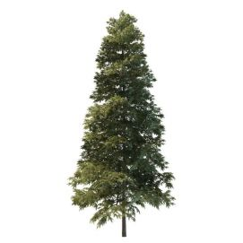 公园松树3d模型