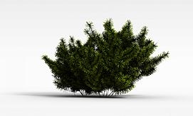 3d松树模型