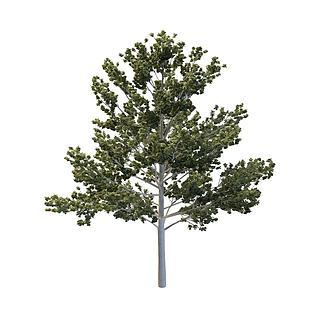 桦<font class='myIsRed'>树</font>3d模型