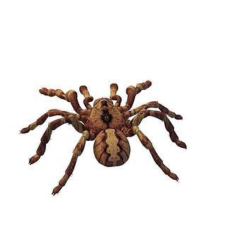 蜘蛛3d模型
