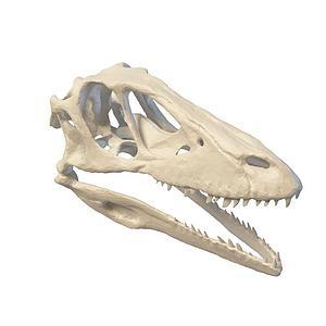 恐龙头骨模型3d模型