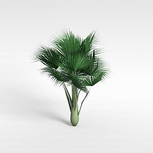 扇子樹模型3d模型
