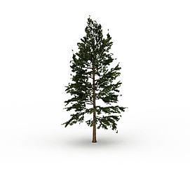长青树3d模型