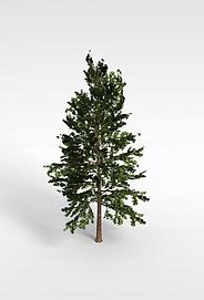 3d长青树模型