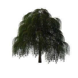 3d柳<font class='myIsRed'>树</font>模型