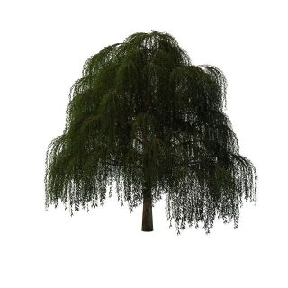 柳<font class='myIsRed'>树</font>3d模型