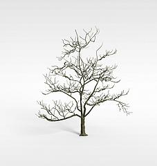 枯树模型3d模型