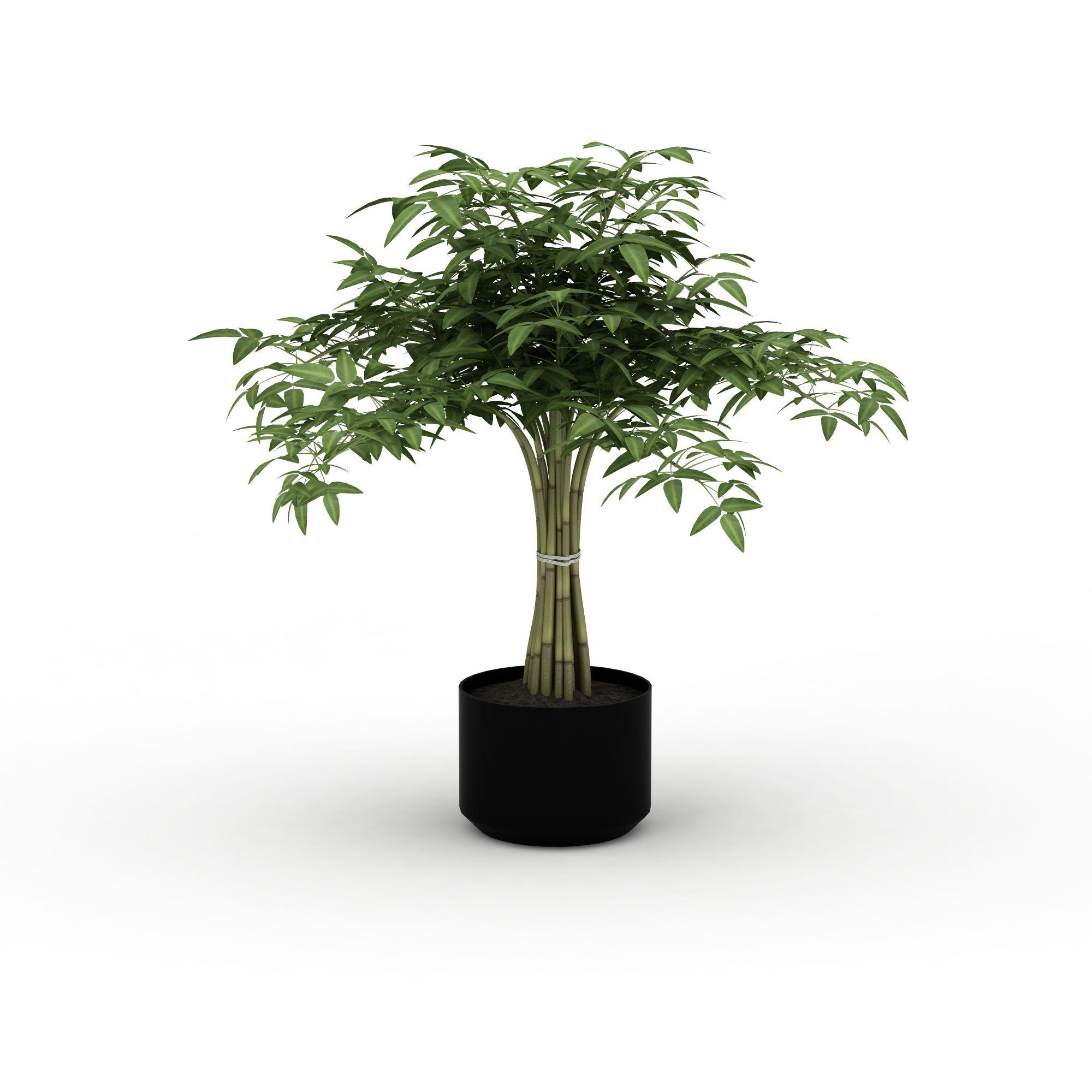 植物 花草 富贵树盆景3d模型 富贵树盆景png高清图  富贵树盆景高清图