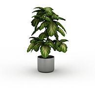 室内植物3D模型3d模型
