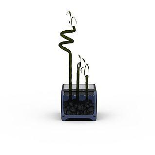 富贵竹3d模型