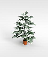 椰子盆栽模型3d模型