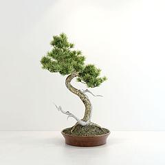 创意松树盆景模型3d模型