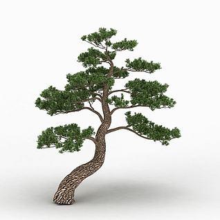 园林松柏3d模型