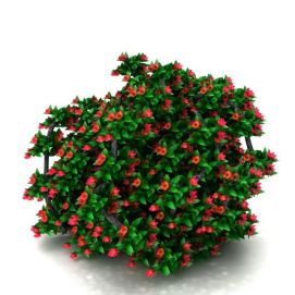 3d仿真灌木模型