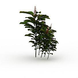 罂粟3d模型