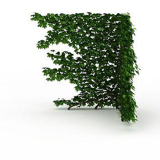 爬山虎3d模型