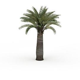 热带树木3d模型