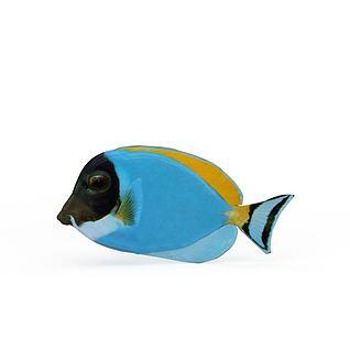 热带鱼3d模型