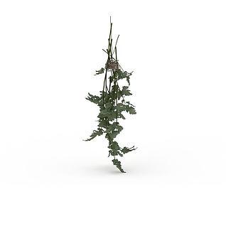 葡萄藤蔓3d模型