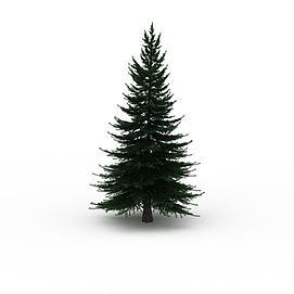 3d松树植物模型