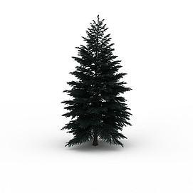 松柏植物树木3d模型