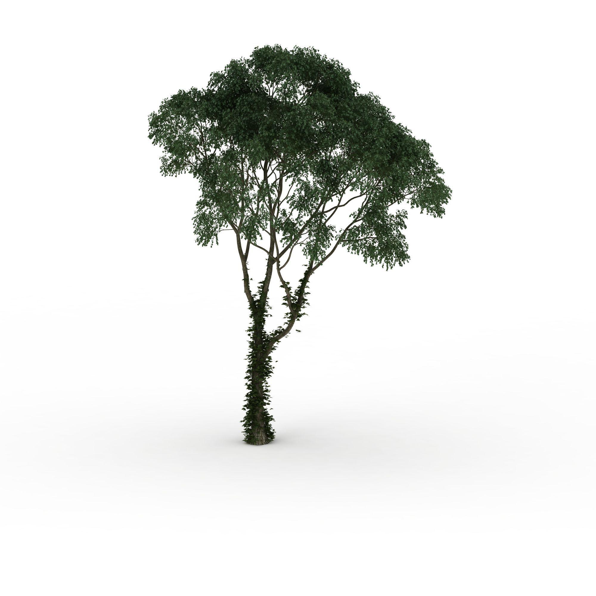 茂盛伞状树木高清图下载