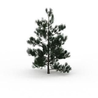 柏<font class='myIsRed'>树</font>3d模型