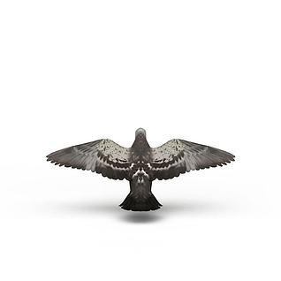 鸽子模型3d模型