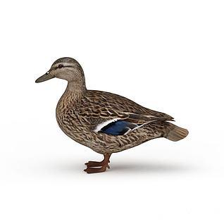 灰色鸭子3d模型