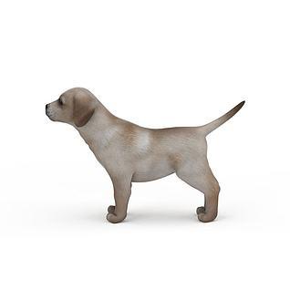 花色小狗3d模型
