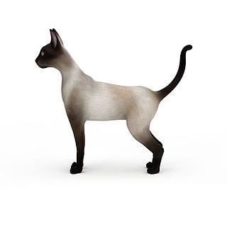 猫科<font class='myIsRed'>动物</font>3d模型