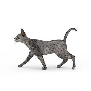 斑点猫3d模型