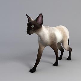小猫玩具模型