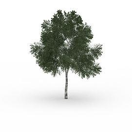 公园景观<font class='myIsRed'>树</font>3d模型