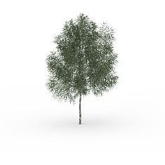 公园景观树3D模型3d模型