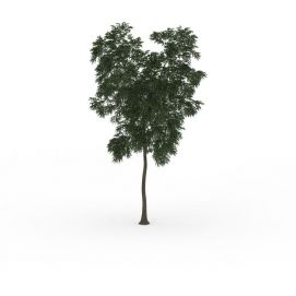 公园绿叶<font class='myIsRed'>树</font>3d模型