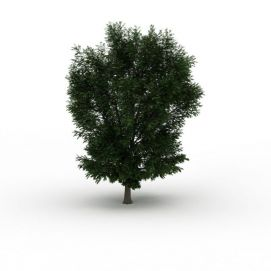 大<font class='myIsRed'>树</font>冠绿叶<font class='myIsRed'>树</font>3d模型