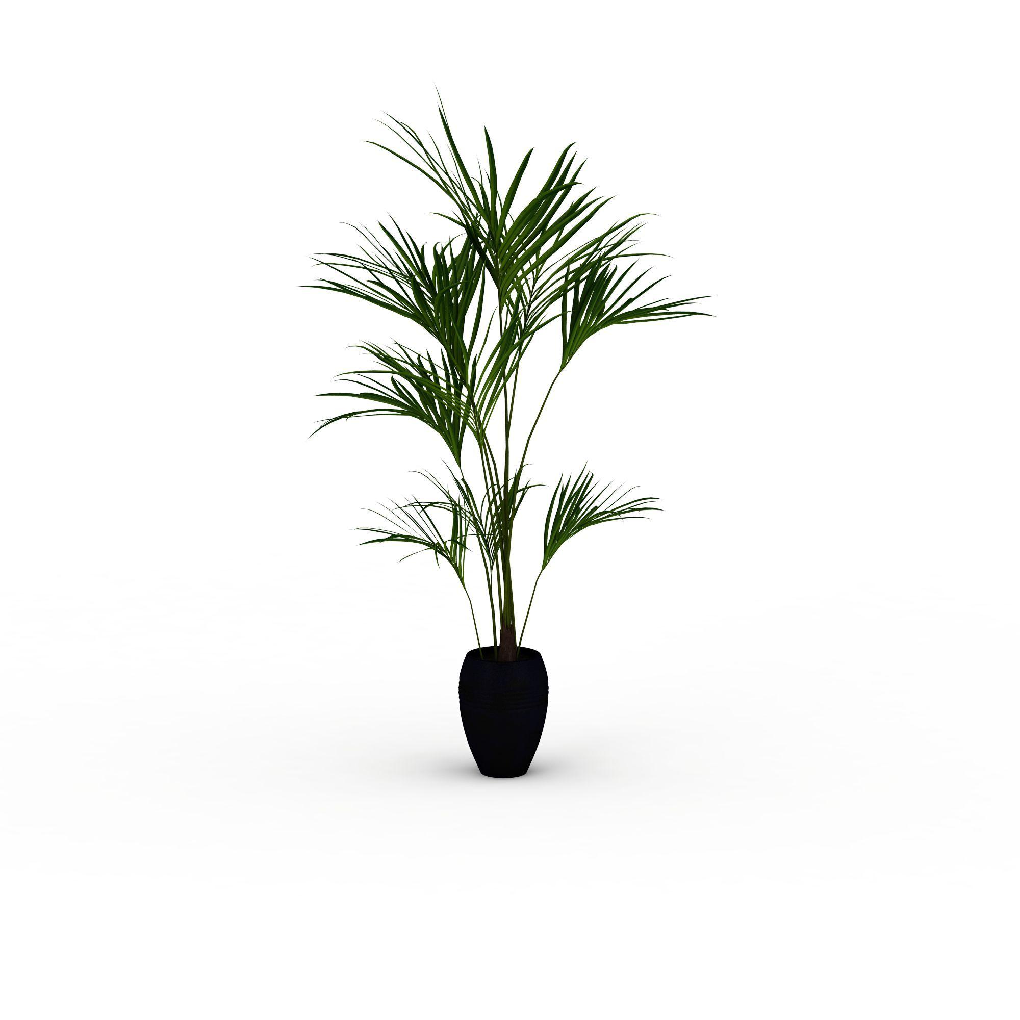 细长叶子盆栽高清图下载