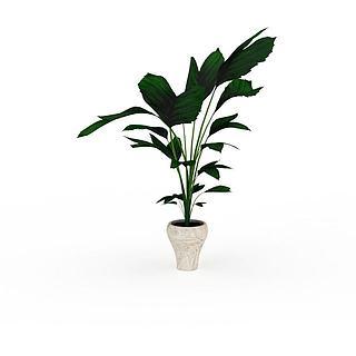 大叶绿色植物3d模型