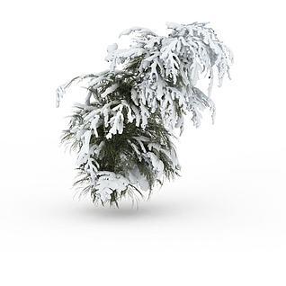 冬天带雪松树模型