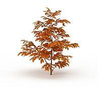 茂密黄叶树3D模型3d模型