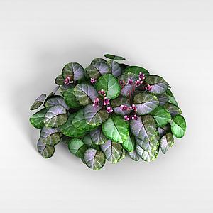 3d大<font class='myIsRed'>葉子</font>紫花植物模型